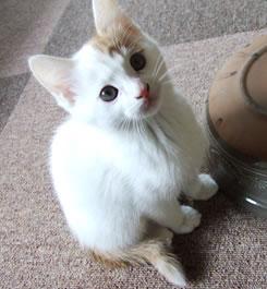 Cat Cafe もっちー